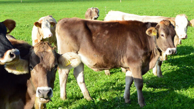 牛屠宰设备